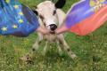 Šok pro EU! Ukrajinci nenašli lídra delegace do EP – tak to odpískali